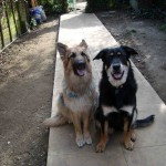 My other two dogs